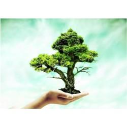 Yeşil Kimya